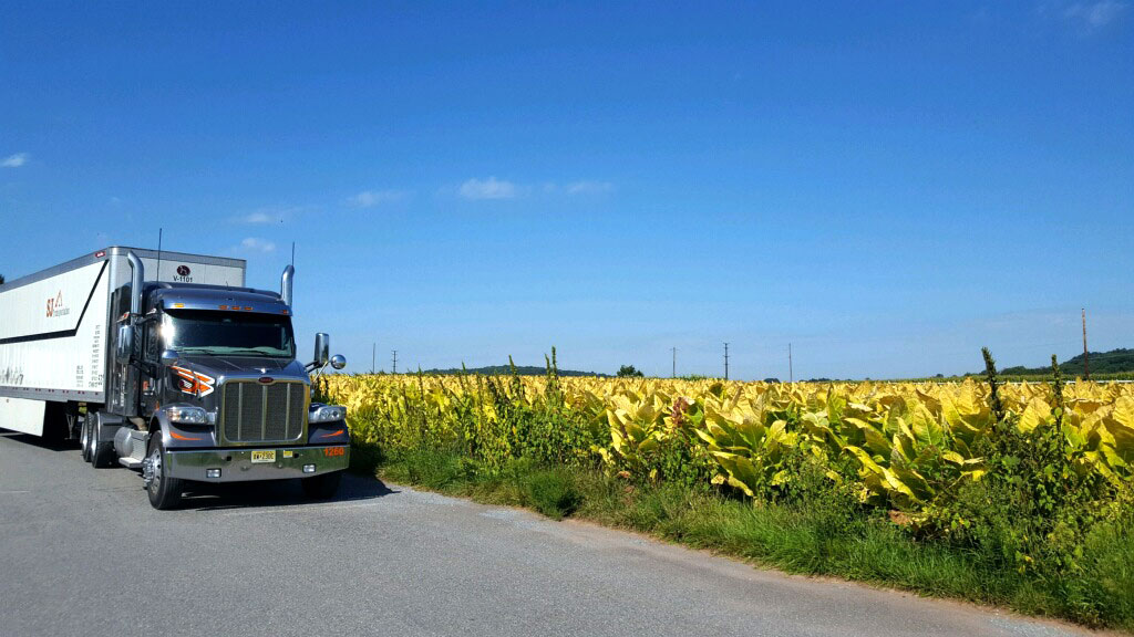 Truck with bright blue sky and field with yellow crops